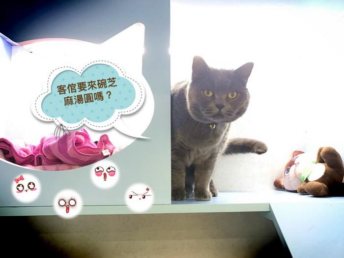 貓語花香精品貓旅館元宵節