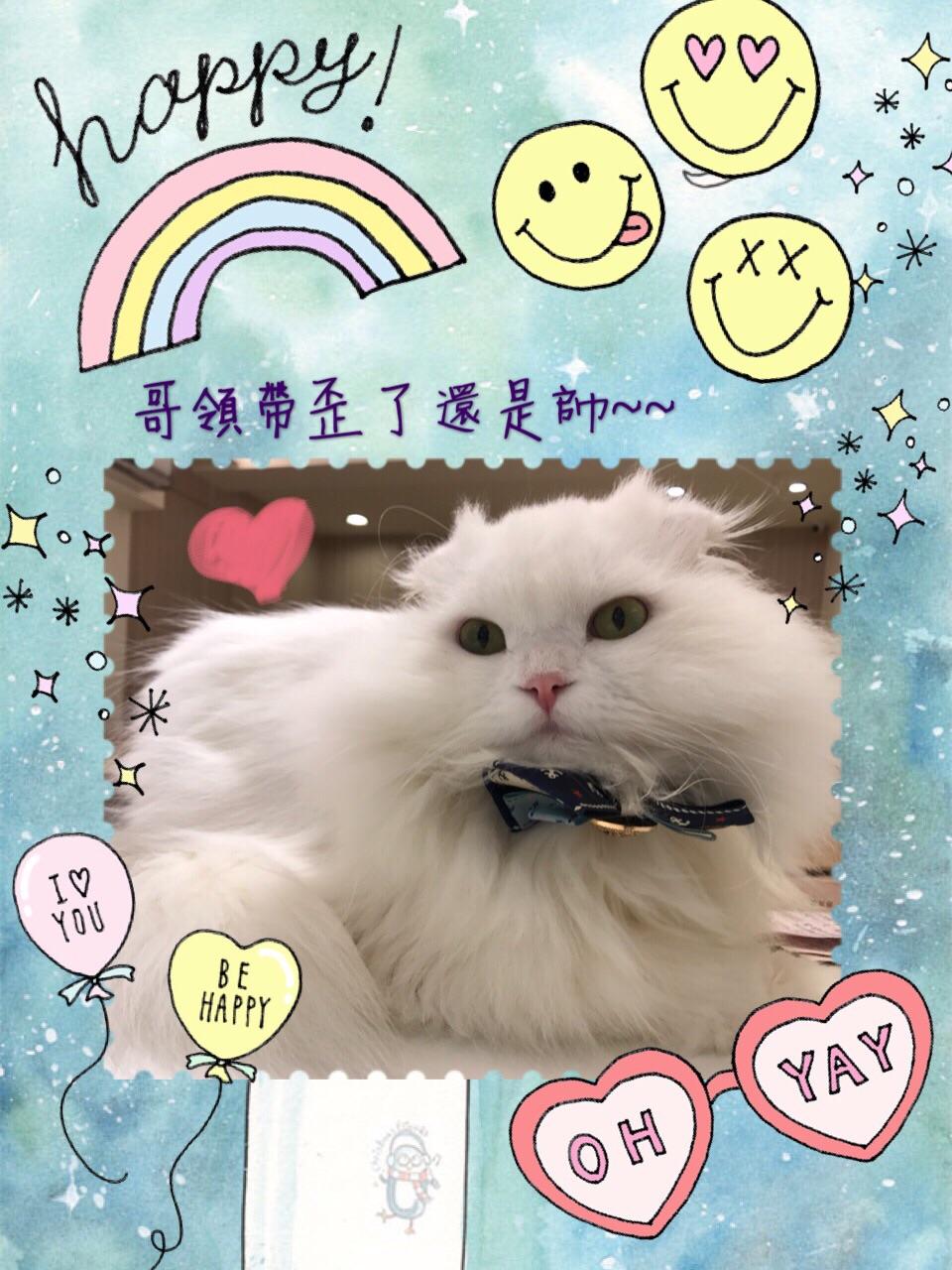 貓語花香 貓旅館