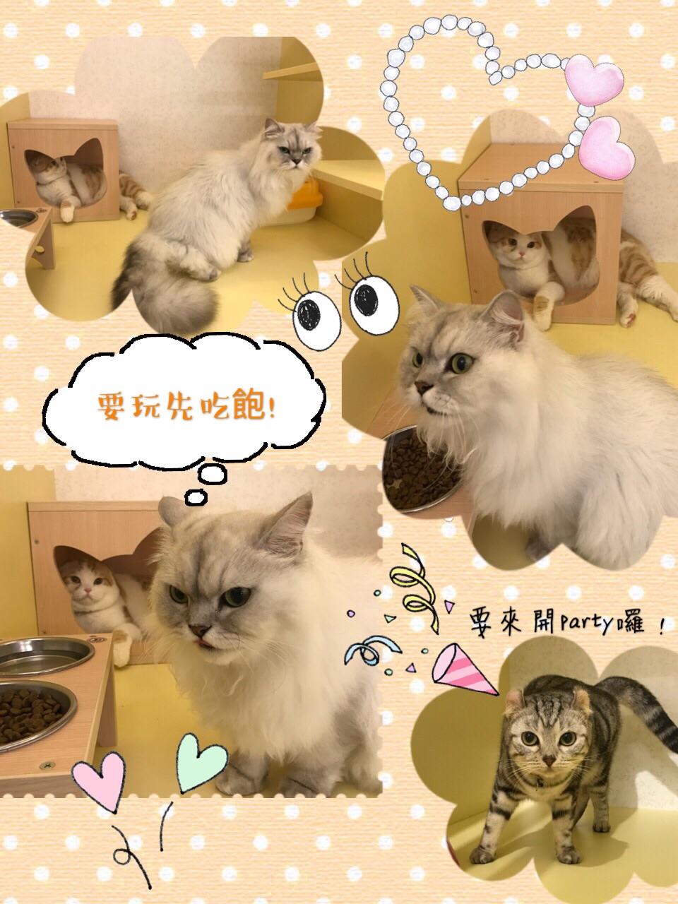 貓語花香 台北貓旅館
