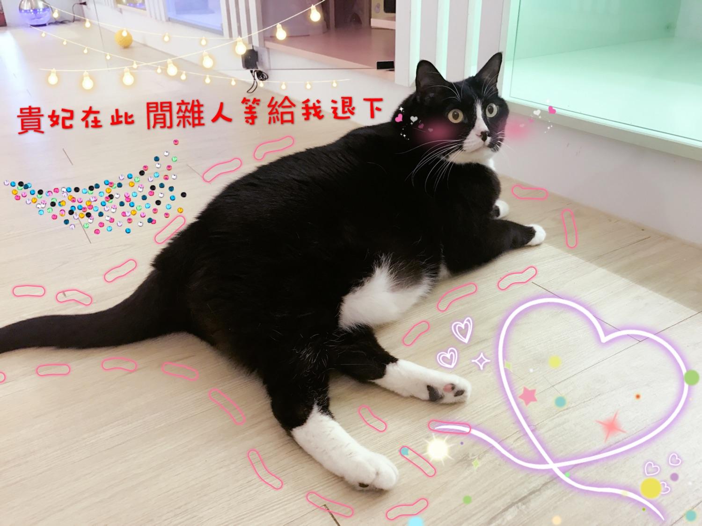 貓語花香 台北貓住宿