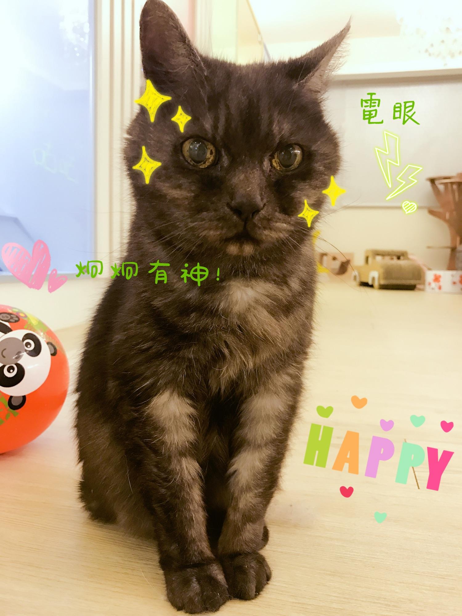 貓語花香 貓住宿