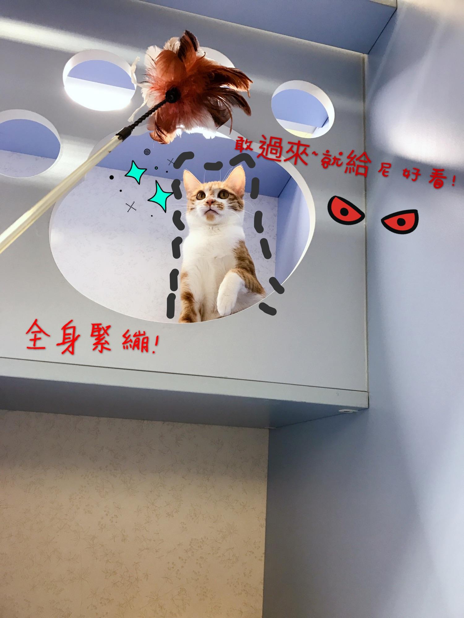 貓語花香 推薦貓旅館