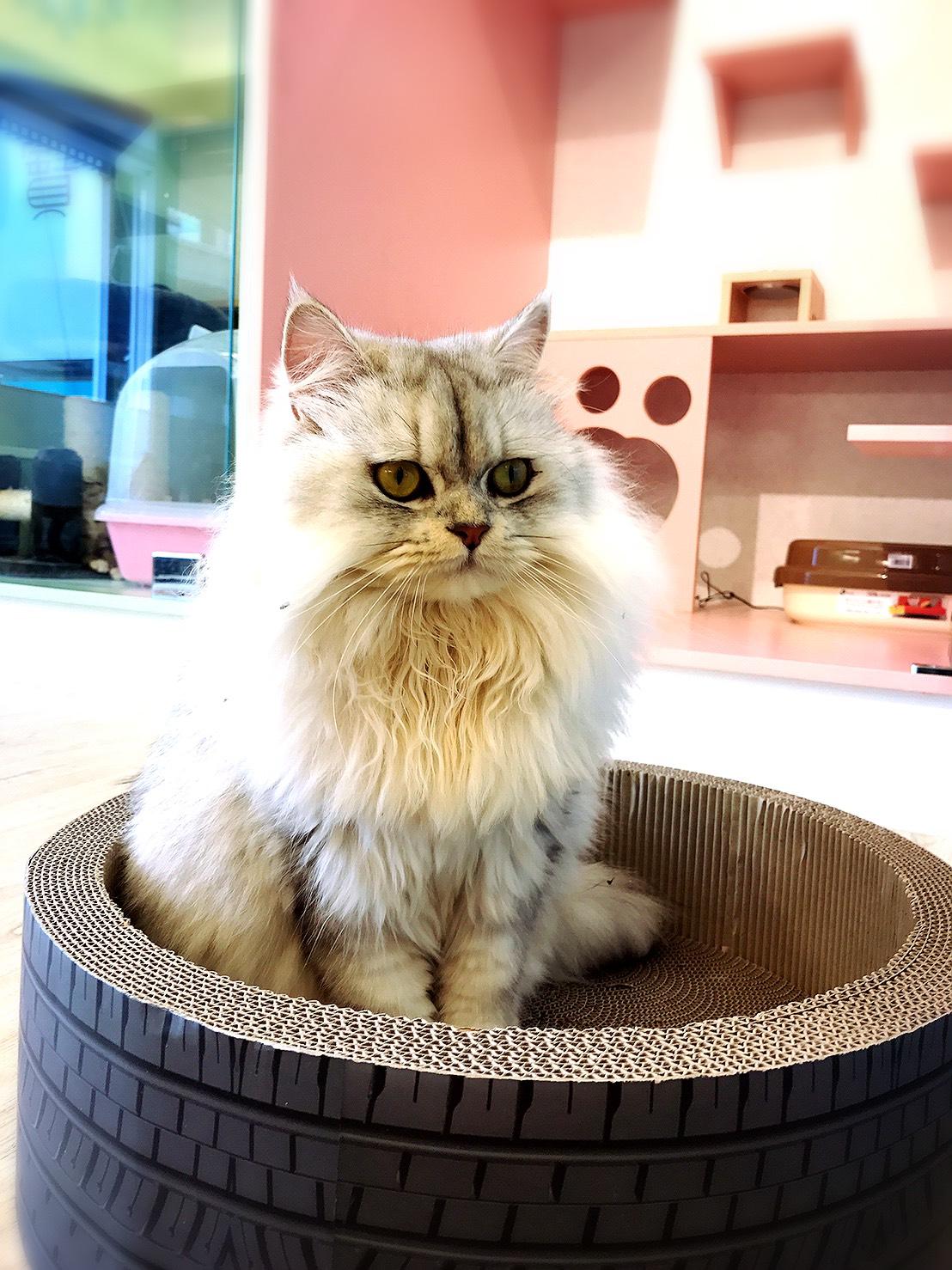 頂級貓旅館
